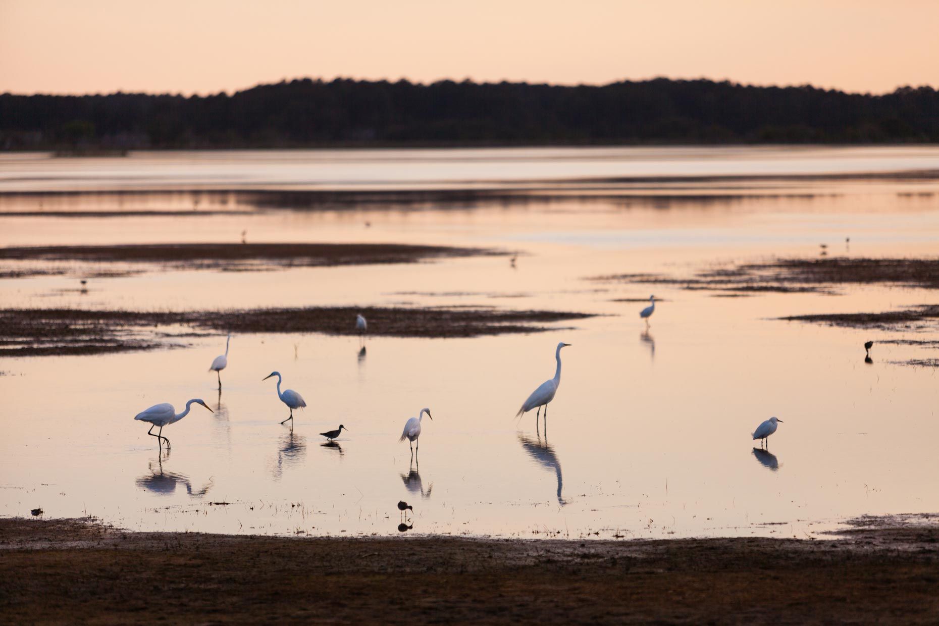 Chincoteague National Wildlife Refuge, Virginia  |  Nature + Landscape